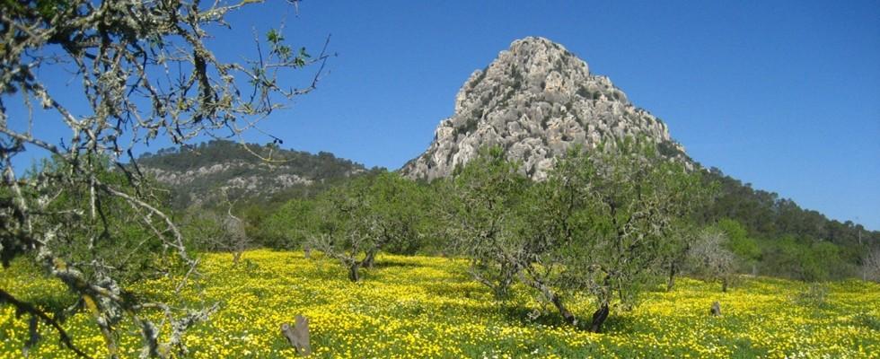 Blumenwiese am Hexenberg bei Algaida