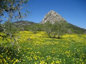 Der Hexenberg abei Algaida